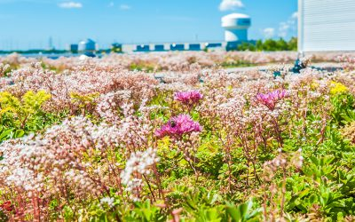 Waterproofing Green Roofs