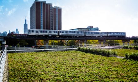 Green Roof Profile: Chicago Bulls Practice Facility