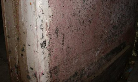 Mold Remediation: An Update