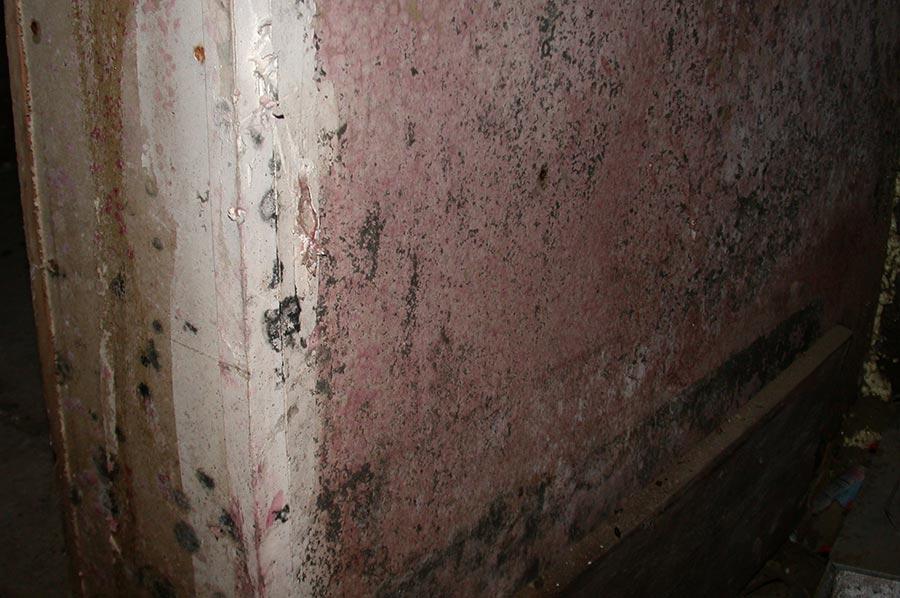 Mold Remediation: An Update
