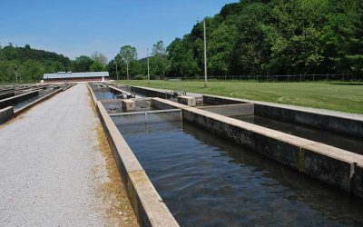 Rehabilitating Reeds Creek Fish Hatchery