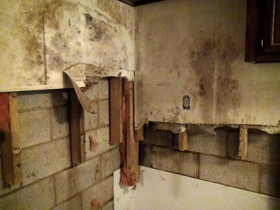 Mold Growth in New Construction